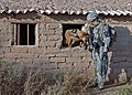 US Navy 071223-N-1132M-025 A Dog Handler working with the 2nd Squadron, 1st Cavalry Regiment helps to clear a building.jpg