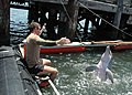 US Navy 100608-N-9806M-097 Sailors work with a bottlenose dolphin at Joint Expeditionary Base Little Creek-Fort Story during Frontier Sentinel 2010.jpg