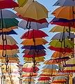 Umbrellas in Novigrad, Istria County, Croatia 07.jpg