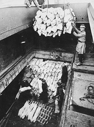 Reefer ship - Unloading frozen pork from the Clan Line ship Clan MacDougall in the mid-20th century