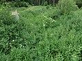 Ursprungbach beim Wasserwerk Krämersweiher 2015-06-10 18.50.10.jpg