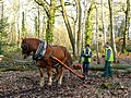 Valley Park - Logging the Old Fashion Way - geograph.org.uk - 696811.jpg