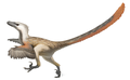 Up to 2 m long and 0.5 m high at the hip, Velociraptor was feathered and roamed the Late Cretaceous.