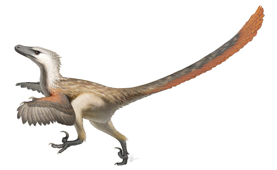 Velociraptor Restoration