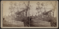 View of horse-carts moving along the street with collapsed houses and downed trees, by Camp, D. S. (Daniel S.) 2.png