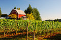Vineyard Barn (Yamhill County, Oregon scenic images) (yamDA0063a).jpg