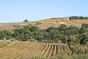 Vineyards in Faugères 02.jpg