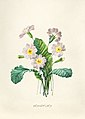 Vintage Flower illustration by Pierre-Joseph Redouté, digitally enhanced by rawpixel 63.jpg