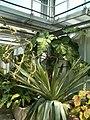 Vriesea tuerckheimii BotGardBln07122011B.JPG