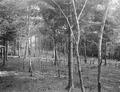 Waldverhaue mit Stacheldrahthindernissen - CH-BAR - 3236588.tif