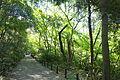 Walkway - Institute for Nature Study, Tokyo - DSC02091.JPG