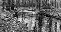 Wandeling over het Hulshorsterzand-Hulshorsterheide 07-03-2020. (d.j.b) 23.jpg