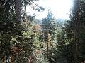 Wanderung im November - panoramio (49).jpg
