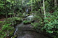 Waterfall-hawks-nest-trail - West Virginia - ForestWander.jpg