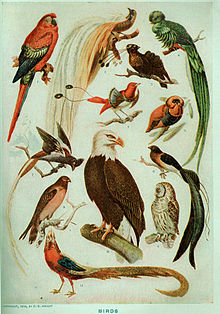 Webster's Birds.jpg