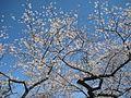 White Roots - panoramio.jpg