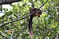 Wild Squirrel.jpg