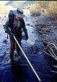 Wild trout project e walker river bridgeport0103 (26275796035).jpg