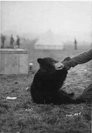 Winnipeg (bear) - Image: Winnie The Pet