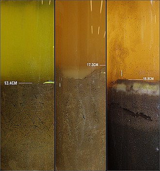 Winogradsky column -  This picture depicts the initial appearance of three different Winogradsky columns.  They are soil and water samples from a river, the later two columns have been modified with phosphate, nitrate, sulfur and oxygen additives. These additions promote the growth of various bacteria specific to the anaerobic and aerobic regions of the column.
