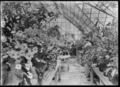 Winter glass-house at the public gardens in Invercargill, 1926 ATLIB 313333.png