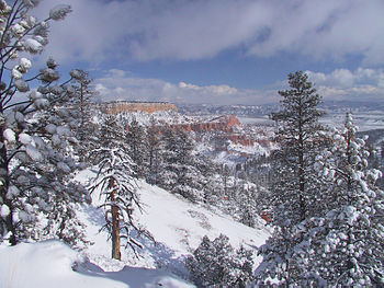 Bryce Canyon has extensive fir forests.