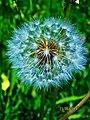 Wishing flower.jpeg