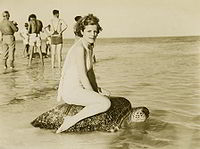 Woman riding turtle at Mon Repos.jpg