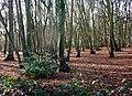 Wood at the edge of Tiptree - geograph.org.uk - 1608683.jpg