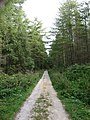 Woodland Track, Newton Hill - geograph.org.uk - 556428.jpg