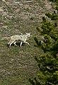 Wyoming - Yellowstone 02.jpg