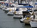 Yachts, Bangor marina - geograph.org.uk - 736774.jpg