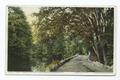Yaddo, Home of Spencer Trask, Saratoga Springs, N.Y (NYPL b12647398-75489).tiff