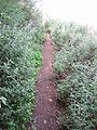 Yagur – Nesher, the Green Path – Mount Carmel 074.JPG