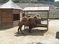 Yerevan Zoo 21.jpg