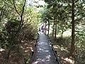 Yulun Trail 雲霧步道 - panoramio.jpg