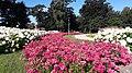 Zambrów - Park Miejski Księży Lasek.jpg