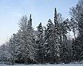 Zavolzhsky District, Ivanovo Oblast, Russia - panoramio - Andris Malygin (1).jpg