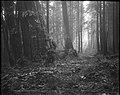 """A Beckoning Vista"", Stanley Park, Vancouver, B.C. (13928364147).jpg"