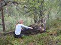 """""""Mumifiserte"""" trær i Sogndal (4024814275).jpg"""