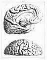 """""""Traite complet de l'anatomie..."""",Foville, 1844 Wellcome L0019133.jpg"""