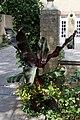 'Cannaceae' Canna (genus) at Quex House Birchington Kent England 1.jpg