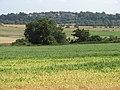(New) Winchelsea - geograph.org.uk - 891259.jpg
