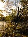 (PL) Polska - Warmia - Ścieżka nad jeziorem Długim w Lesie Miejskim w Olsztynie - Path on the Long Lake in the City Forest in Olsztyn (9.X.2012) - panoramio (16).jpg
