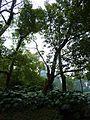 ·˙·ChinaUli2010·.· Hangzhou - panoramio (48).jpg