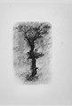 Étude d'un Arbre (Study of a Tree) MET MM65759.jpg