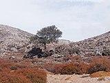 Φθινόπωρο στα Πετραδολάκια Ψηλορείτη 5232 DxO.jpg