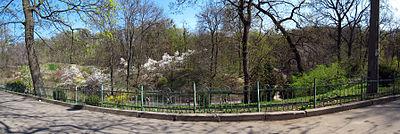 Ботанічний сад ім.Фоміна - 04.jpg
