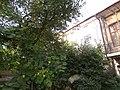 Вілла (мур.), Чортків, вул. Зелена, 25.jpg