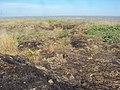 Георгиевский песчаный карьер 022.jpg